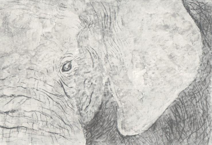 Elephant experiment
