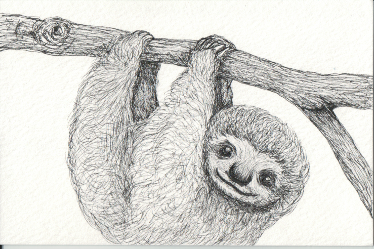 Sloth hanging from branch