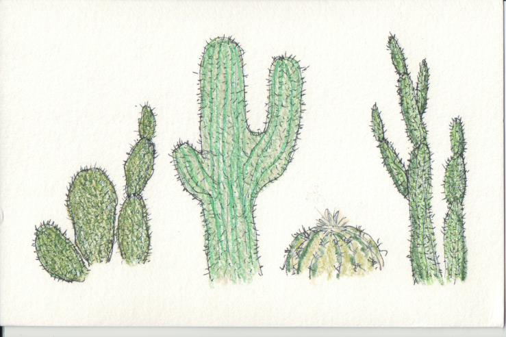 Different types of Cacti